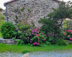 Le Petit Moulin -  Vendée - Gîte et chambres d'hôtes